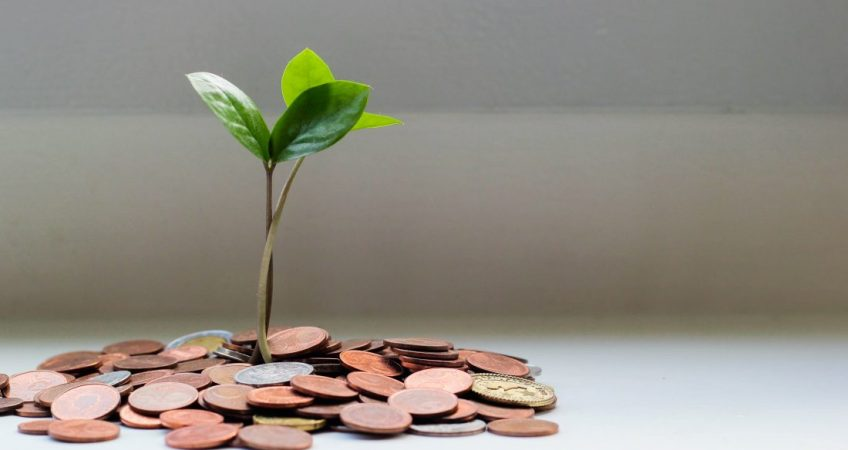 plant growing out of money